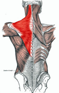 Trapezius Chelsea Natural Health